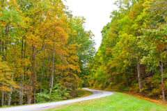 Road in autumn forest. Royalty Free Stock Photography