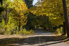 Road in autumn forest. Photo of a road in autumn forest stock photo