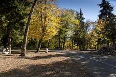 Road in autumn forest. Photo of a road in autumn forest royalty free stock photography