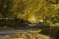 Road in autumn forest. Photo of a road in autumn forest royalty free stock photos