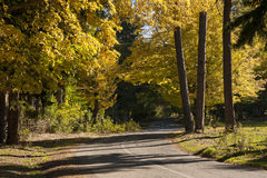 Road in autumn forest. Photo of a road in autumn forest stock photography