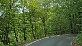 Road in the autumn forest.Plitvice, National Park Plitvicka jezera, Croatia. 4k stock video footage