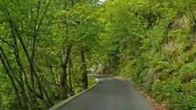 Road in the autumn forest.Plitvice, National Park Plitvicka jezera, Croatia. 4k stock video