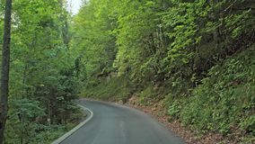 Road in the autumn forest.Plitvice, National Park Plitvicka jezera, Croatia. 4k stock footage