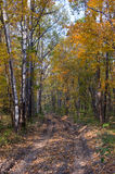 On the road in the autumn forest. Royalty Free Stock Images