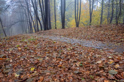 Road through autumn forest after rain Stock Images