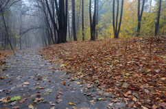 Road through autumn forest after rain Royalty Free Stock Photography