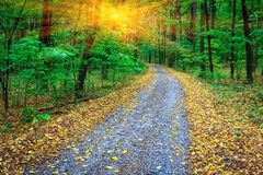 Road in autumn forest Stock Images