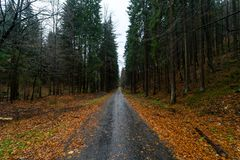 Autumn forest on the slopes of the Krkonose Mountains stock photography