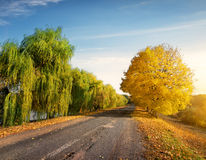 Road through autumn forest Royalty Free Stock Image