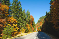 Road at Autumn Forest Stock Images