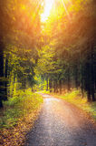 Road in autumn forest at sunset Stock Photography