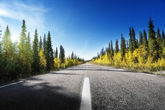 Road in autumn forest, Sweden Stock Images