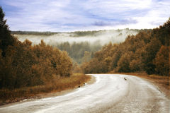 Road autumn  golden forest fog Stock Image
