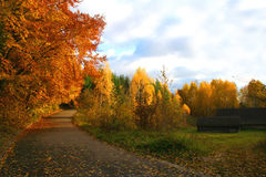 Road, Autumn Landscape. Beautiful vivid nature Royalty Free Stock Photography