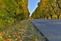 Road in autumn Royalty Free Stock Photos