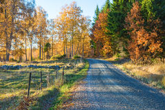 Road in autumn landscape Stock Photos