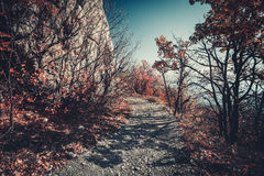Road in autumn mountains Royalty Free Stock Photography