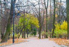 Road through the autumn park Royalty Free Stock Photo