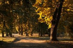 Road autumn park. Road in the autumn park Stock Images