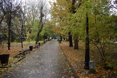 Road in autumn Park blank Royalty Free Stock Image