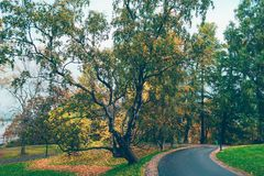 Road through autumn park in city. Scenic view of curving road through autumn park in city Royalty Free Stock Images
