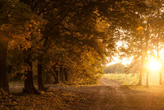 Road in autumn park Royalty Free Stock Photography