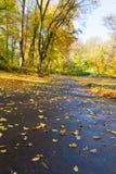 Road in autumn park Stock Photo
