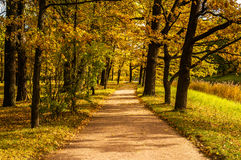 Road in autumn park in the morning Stock Photos