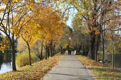 Road in the autumn park near the lake stock image