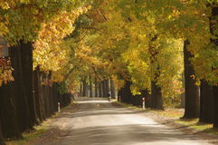 Road in the autumn. Stock Photo