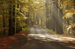 Road in the autumn. Royalty Free Stock Photo