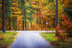 Road through autumn Reserve Royalty Free Stock Photos