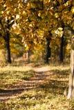 Road (autumn season) Stock Photo