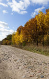 Road in the autumn season Royalty Free Stock Image