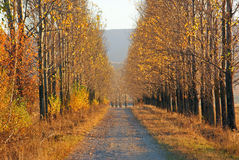 Road in autumn time Royalty Free Stock Photo