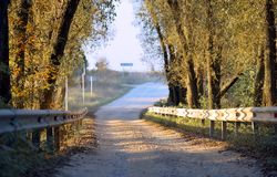 The road between autumn trees Royalty Free Stock Image
