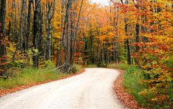 Road Through Autumn Trees Stock Image