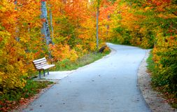 Road Through Autumn Trees Royalty Free Stock Photography