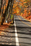 Road Through Autumn Trees Stock Photography