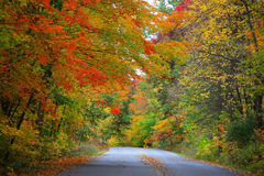 Road through  autumn trees Royalty Free Stock Photos