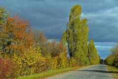 Road and autumn trees Stock Photography