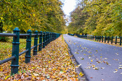 Road with autumn trees with yellow and orange foliage. Stock Images