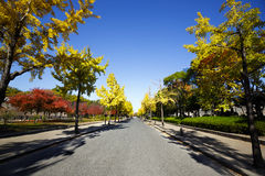 Road in autumn Stock Image