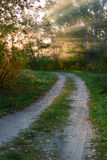 Road in autumn wood Stock Photography