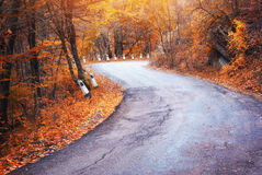 Road in autumn wood. Royalty Free Stock Images
