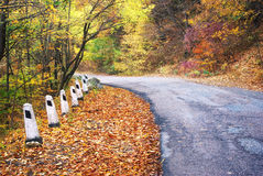 Road in autumn wood. Royalty Free Stock Photography