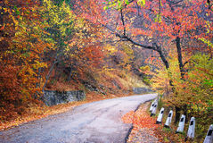Road in autumn wood. royalty free stock photos