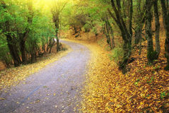 Road in autumn wood. Royalty Free Stock Photo