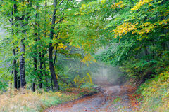 Road in autumn wood. Beautiful country road that runs along a forest . It is autumn. Fallen leaves lie on the road. There is a fog in the forest Stock Images